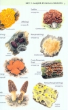 Collins_Fungi_Guide9.jpg