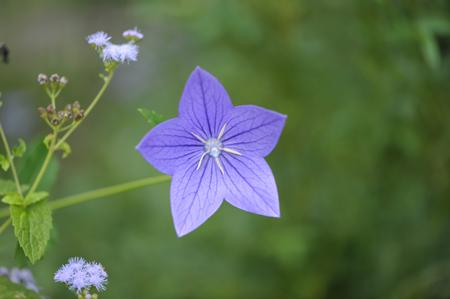 blueg2015904-3.jpg