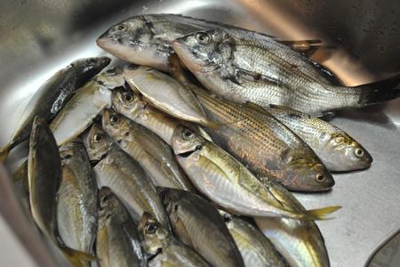 fish2015928-1.jpg