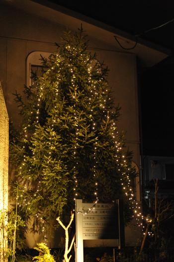 tree201512-2.jpg