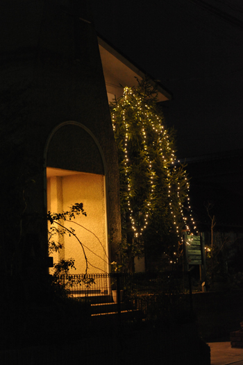 tree201512-4.jpg