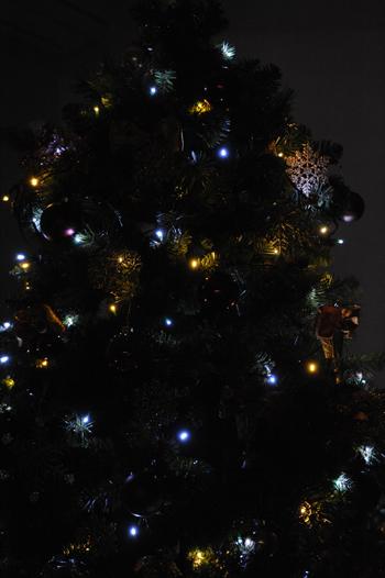 tree201512-8b.jpg