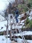 雪の中の雪囲い