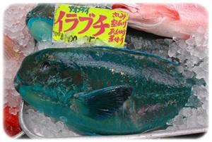 sayomaru14-584.jpg