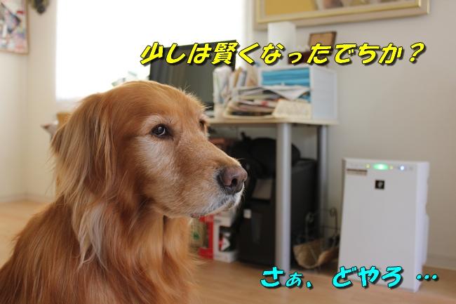 表情 017