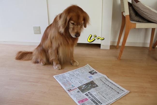 プールと新聞 130
