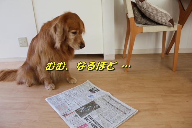 プールと新聞 131