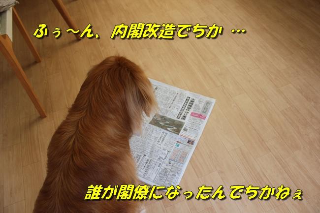 プールと新聞 136