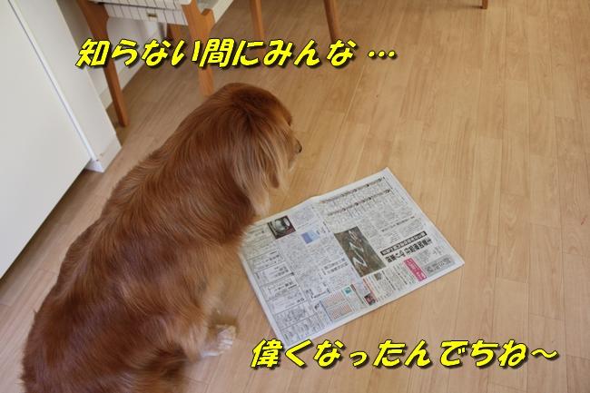 プールと新聞 138