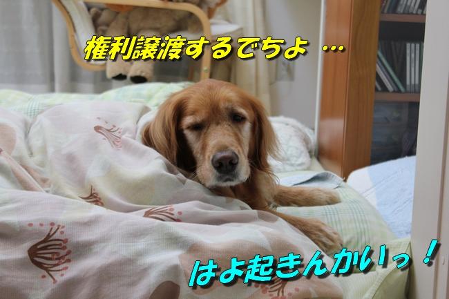 睡眠地図矢沢 003