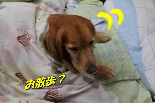 睡眠地図矢沢 008