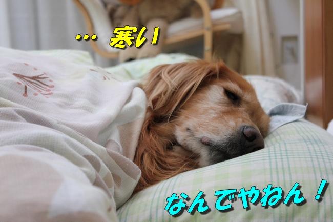 睡眠地図矢沢 015