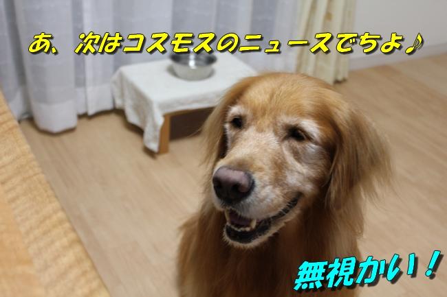 プール&旭化成謝罪 158