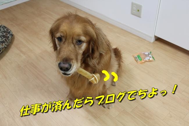 ケイティ&ぱぱ 039