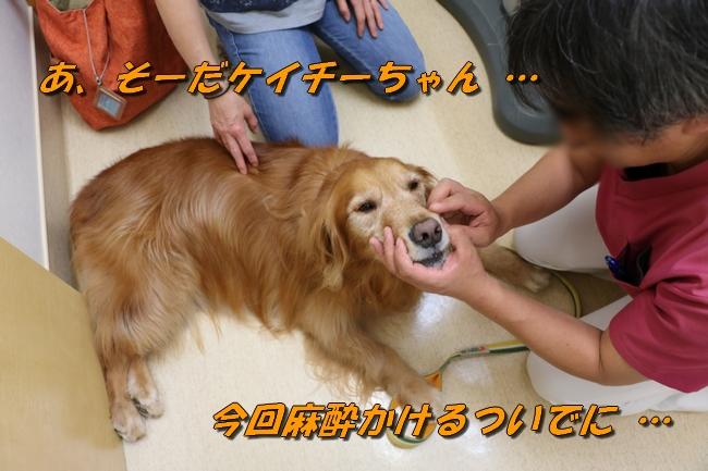 秋の彩音医院 006