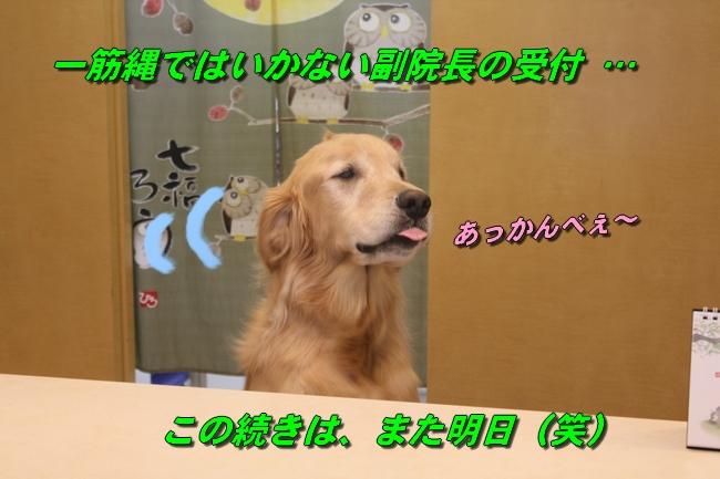 シエル動物病院 052