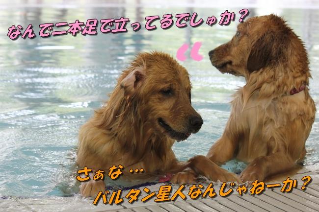 with こなつ&さくら 062