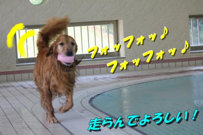 プール&旭化成謝罪 022