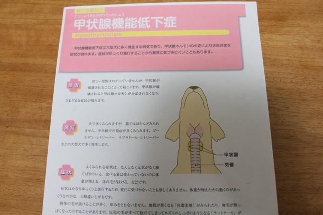 甲状腺機能低下症 005