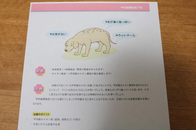 甲状腺機能低下症 006