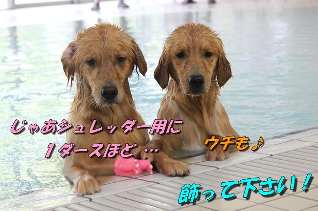 with こなつ&さくら 039