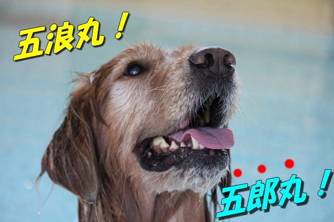 プール&旭化成謝罪 069