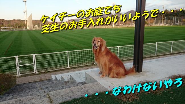 DSC_4203.jpg