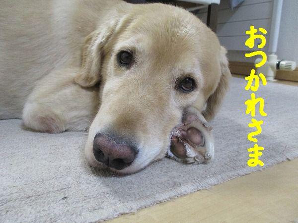 2015-09-13-ハチ-004