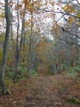 額取山の登山道の紅葉