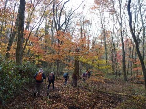 紅葉に包まれる登山道