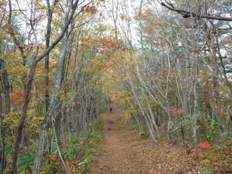 登山道の紅葉