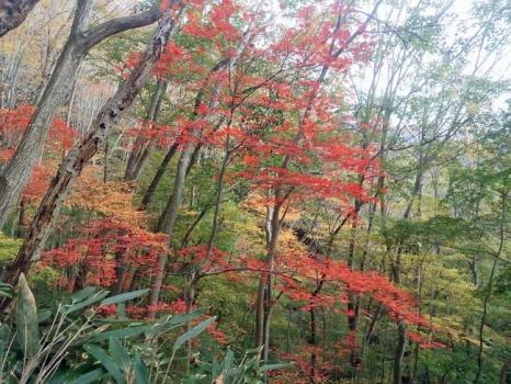 男体山登山道からの紅葉