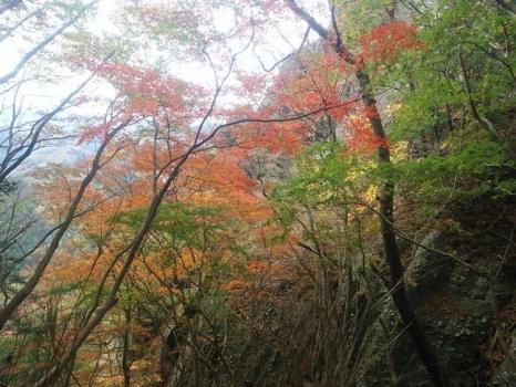 登山道からの紅葉