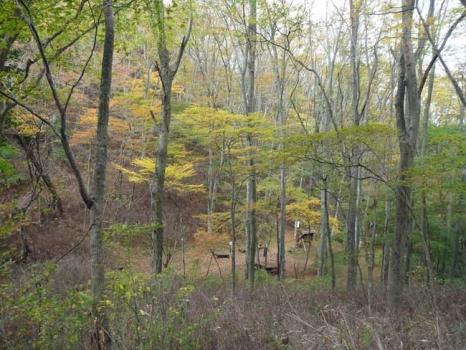 登山道からの黄葉