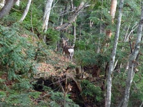 鹿に見送られて出発