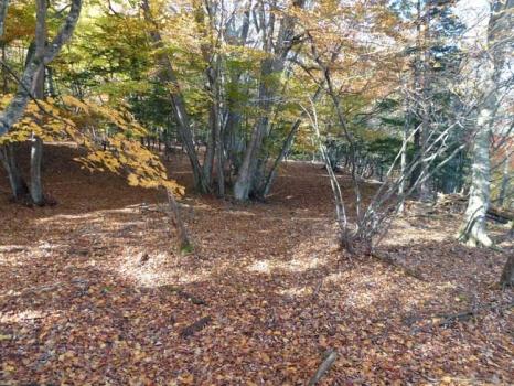 梵字岩周辺の紅葉
