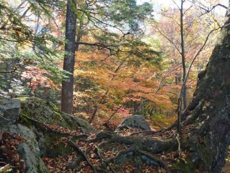 俵岩周辺の紅葉