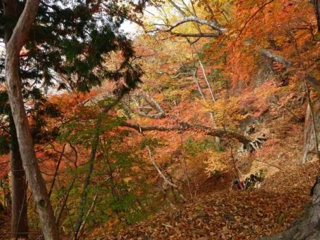 菖蒲が浜近くの紅葉