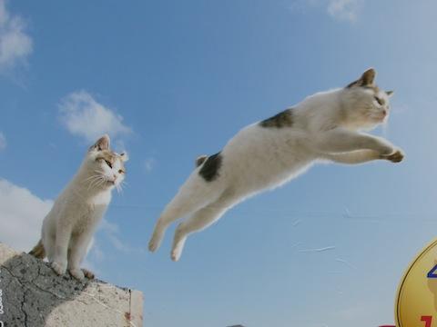猫飛ぶP1110466 のコピー