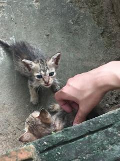 寺院の捨て子猫
