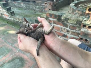 いじらしい捨て子猫…。
