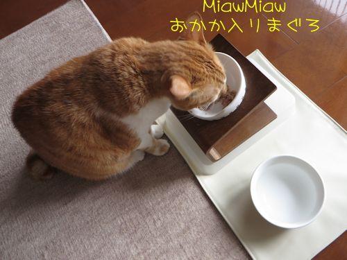 猫缶好きー
