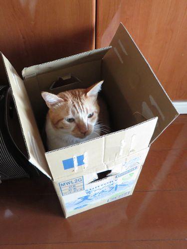 箱入りぼんちゃん