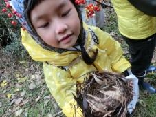 4 鳥の巣