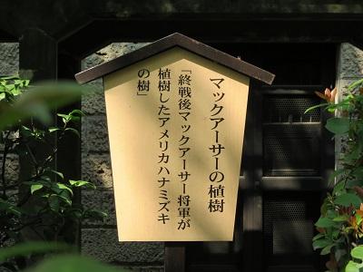 IMG_3710 ハナミズキ
