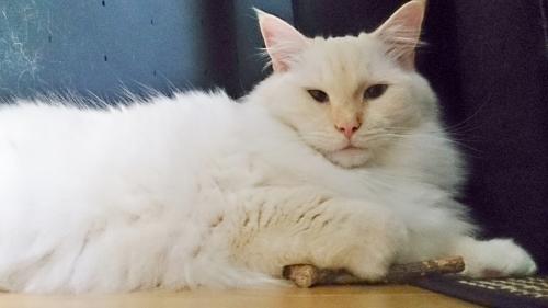 白玉猫とまたたび