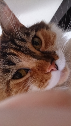 小豆猫_睨む4