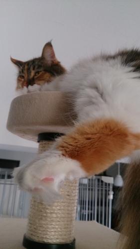 小豆猫‗睨む5