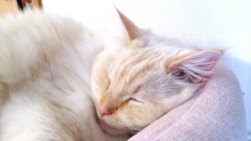 はみ出る白玉猫2
