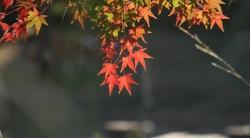 2008-11-20 鶴見緑地 010 600×331